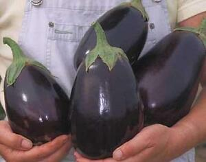 Eggplant Black Beauty Vegetable Seeds