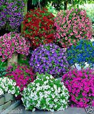 20  Petunias- MIXED, multiflorra  seeds SF-814 , Flower Seeds + free fungicite
