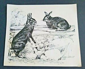 Vintage RABBITS 1968 Pen and Ink Wildlife Illustration signed DENNIS ALDER