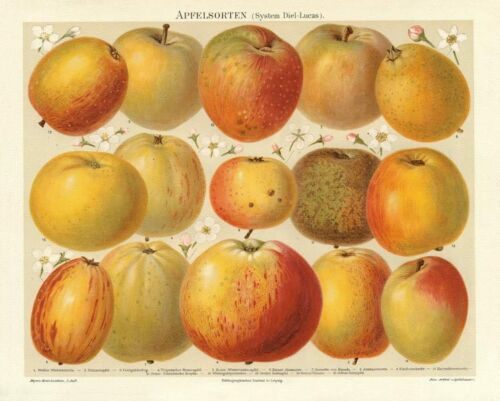 Apfelsorten Kaiser Alexander Renette Wintergold Original Chromolithographie
