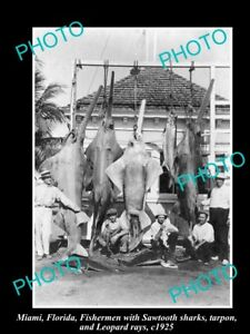 OLD-LARGE-HISTORICAL-GAME-FISHING-PHOTO-OF-SHARKS-AND-RAYS-MIAMI-c1925