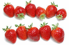 1500 Strawberry Seeds Strawberries Red Garden Fruit Heirloom Fragaria ananassa