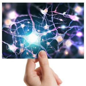 Foto-6x4-034-menschlichen-Nervensystem-Biologie-Kunst-15x10cm-3366