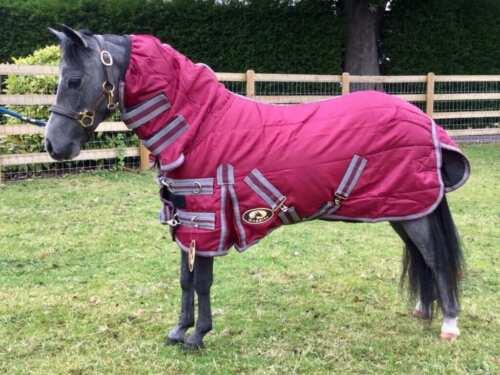 Shetland-Miniature-Donkey-Section A 100g Combo Stable Rug