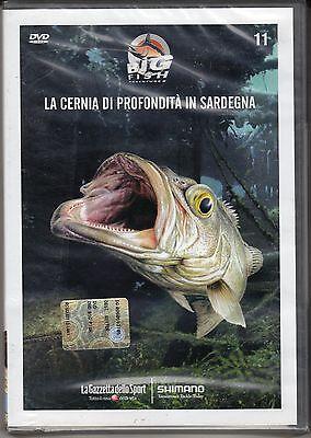 Bigfish Neu