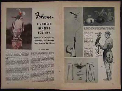 American Hawk Peregrine Falcons 1941 Falconry Pictorial Ebay