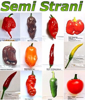 10 Stücke Garten Seltene Riesen Chili Pepper Würzige Gemüse Pflanzensamen