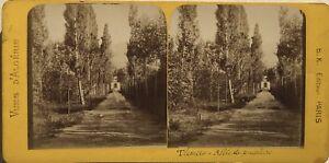 Algeria-Tlemcen-Allee-Da-Pioppi-Foto-Stereo-B-K-Parigi-Vintage-Albumina