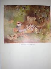 French Partridge Roland Green Bird Print 1949