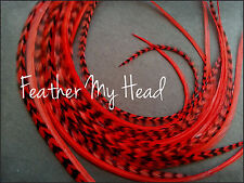 """Whiting  Super Euro Extra Long Length Feather Hair Extension 12"""" Or Longer DIY"""