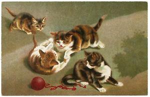 Chats-Cats-Katze-Wenau-Delila