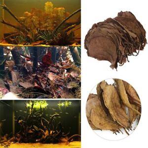 50-100-200g-Catappa-Leaves-Almond-Tree-Aquarium-Clean-Tool-Terminalia-Leaf
