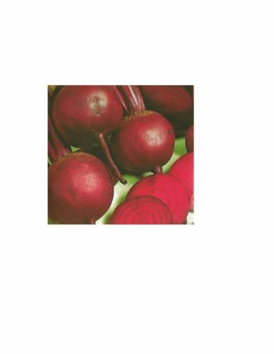 Rote Rüben Rote Kugel 2 Samen Saatgut Saat Gärtnerqualität Rote Bete