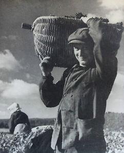 Photographie-Henri-Gros-Dijon-Bourgogne-Vin-Vigne-Vendanges-annees-1930-40-n-15