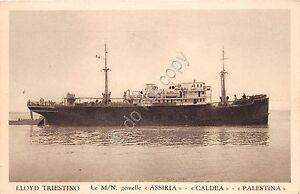 Cartolina-M-N-gemelle-Assiria-Caldea-Palestina-Lloyd-Triestino