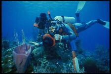 156034 Underwater Photographer With Caribbean Sponge A4 Photo Print