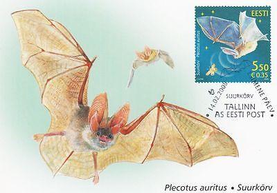 Bat Plecotus Auritus Estonia Estland Maxi FDC 2008