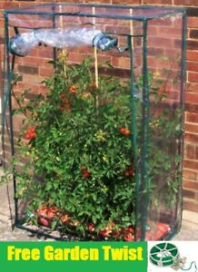 Pleasant Details About Tomato Greenhouse Garden Plants Cold Frame Small Green House Free Garden Twist Interior Design Ideas Philsoteloinfo