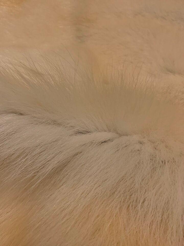 Fluer, Isbjørn