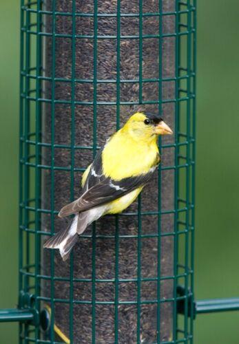 Squirrel Buster Finch Squirrel-proof Bird Feeder w//4 Metal Perches /& 8 Feeding