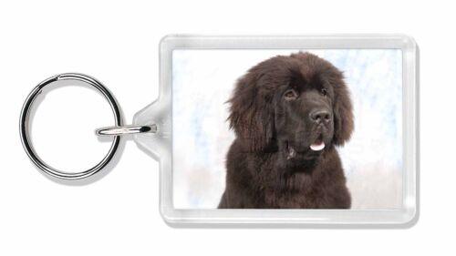 AD-NF1K Newfoundland Dog Photo Keyring Animal Gift