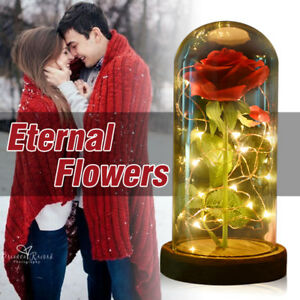 WR-Beauty-and-the-Beast-Enchanted-Red-Rose-In-Glass-Dome-LED-Lamp-Christmas-Gift