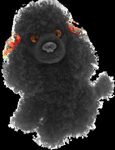 Black Toy Dog Goldenacresdogs Com