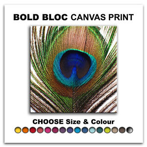 Peacock Feathers ANIMALS  Canvas Art Print Box Framed Picture Wall Hanging BBD