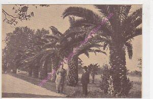 CPA-SEPIA-83210-SOLLIES-PONT-Chemin-palmiers-domaine-Beaulieu
