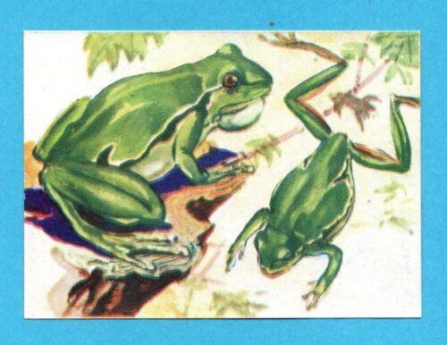 -LAMPO 1954-FIGURINA a scelta-STICKER at choice-Rec. ANIMALI B NUOVA RACCOLTA