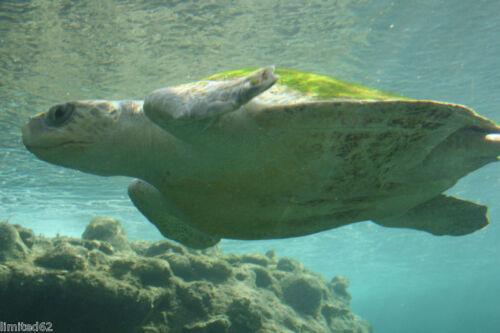 4 piece Set Wild Republic Eco Dome Sea Turtle