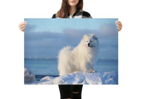 A1Samoyed Dog Poster Art Print 60 x 90cm 180gsm Siberia Puppy Fun Gift #12673