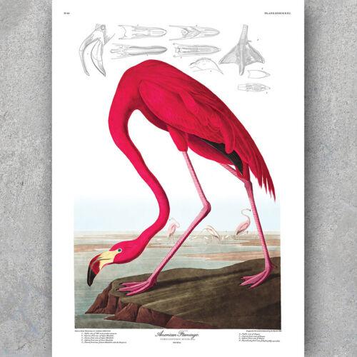 Decor Art Print A3 A6 Vintage Nature Study POSTER AMERICAN FLAMINGO