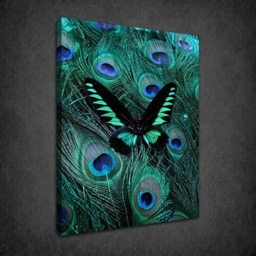 PEACOCK FEATHERS BUTTERFLY STUNNING BOX CANVAS PRINT WALL ART PICTURE