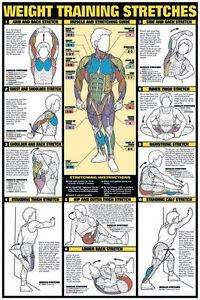 Weight training essay