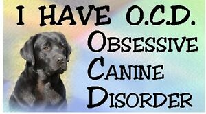 LABRADOR-Black-OBSESSIVE-CANINE-DISORDER-Dog-Car-Sticker-By-Starprint