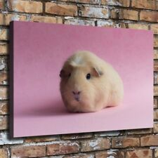 Lovely Pig With Glasses Canvas Prints Wall Art Colorful Animal