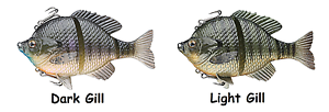 """Choice of Colors and Sink Rates Savage Gear 3D 5/"""" Bluegill Swimbait"""