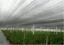 miniatuur 4 - 2x6 m 60% UV Black Shade Cloth Sunshade Fabric Greenhouse