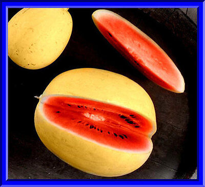 Golden Midget Watermelon Seeds! Hard to find and delicious! Comb. S/H