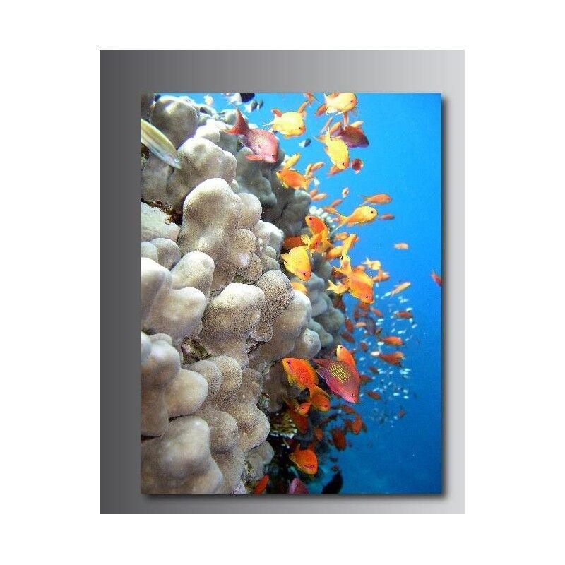Cuadro rectangular tela decoración rectangular Cuadro pescado y conchas 17670367 b01735