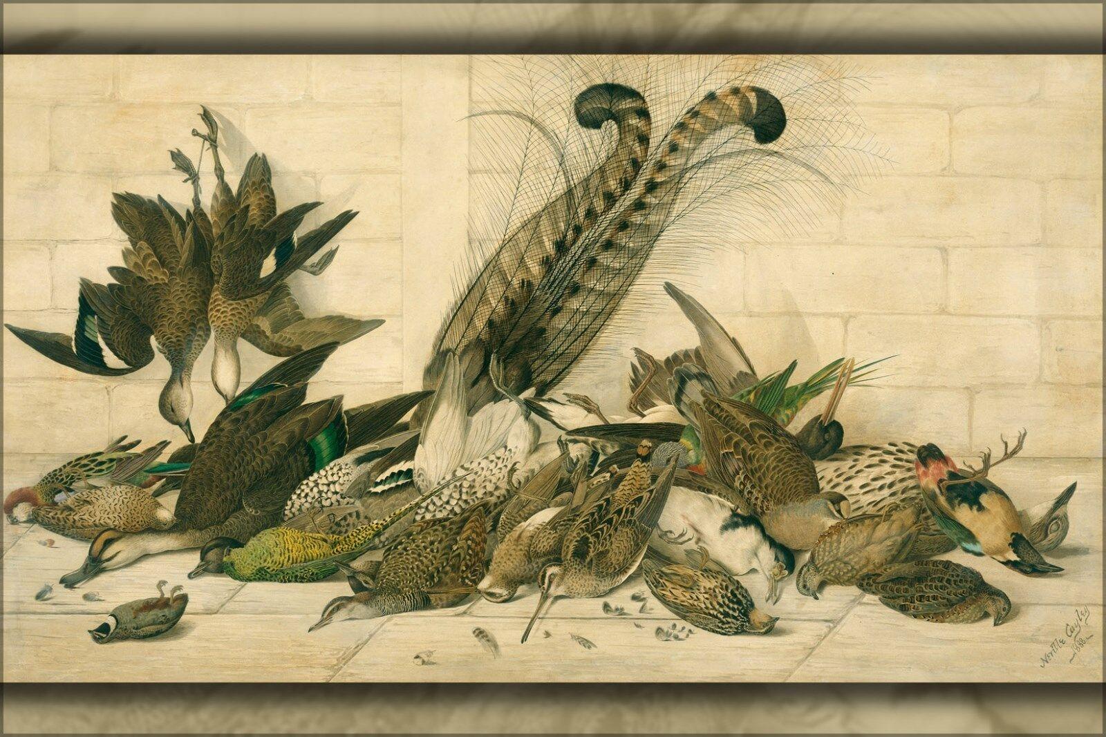 Affiche,Plusieurs Tailles; Neville Cayley - Ne Pas Pas Pas à Titre (Australien Gamebirds 1b29bd
