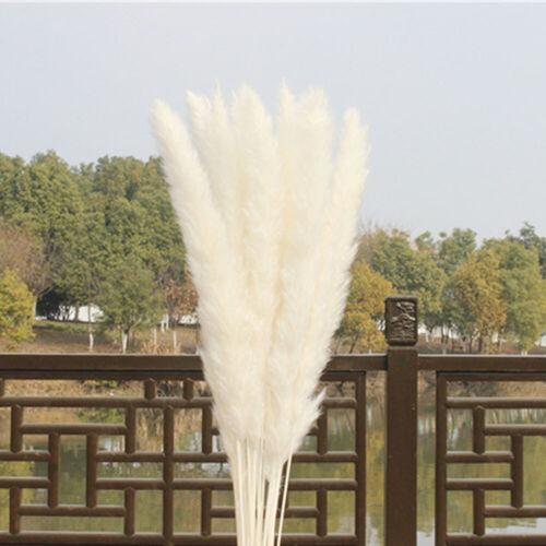 15Pcs Natural Dried Pampas Grass Reed Home Wedding Flower Bunch Decor Nice #HA2