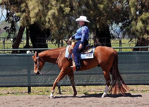 Horse Tail Extension 36  BIG 2 pounds KATHY'S TAIL FREE Ship&bag AQHA APHA NSBA