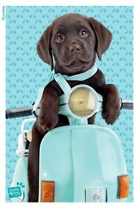 Scooter - Maxi Poster 61cm x 91.5cm PP33628-288 Studio Pets Dogs