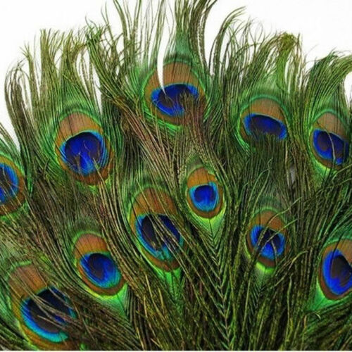 10pcs beautiful natural peacock feather eyes 10-12 inches 25-30 cm Dance Party