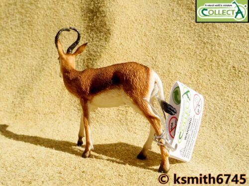 Nuevo CollectA Springbok Juguete Animal Salvaje Zoológico de plástico sólido antílope