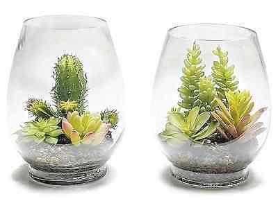 Composizione Piante Grasse In Vaso Di Vetro.Grasse False Collection On Ebay