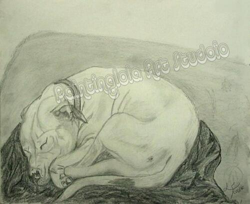 White Pit Bull Portrait Dog Sleeping Sketch Art Drawing Reproduction always next
