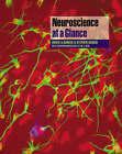 Neuroscience at a Glance by Michael J. Neal, S. Barasi, Roger Barker (Paperback, 1999)